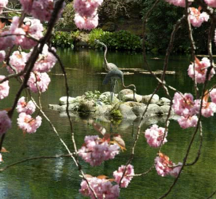 Cranes in Japanese Gardens