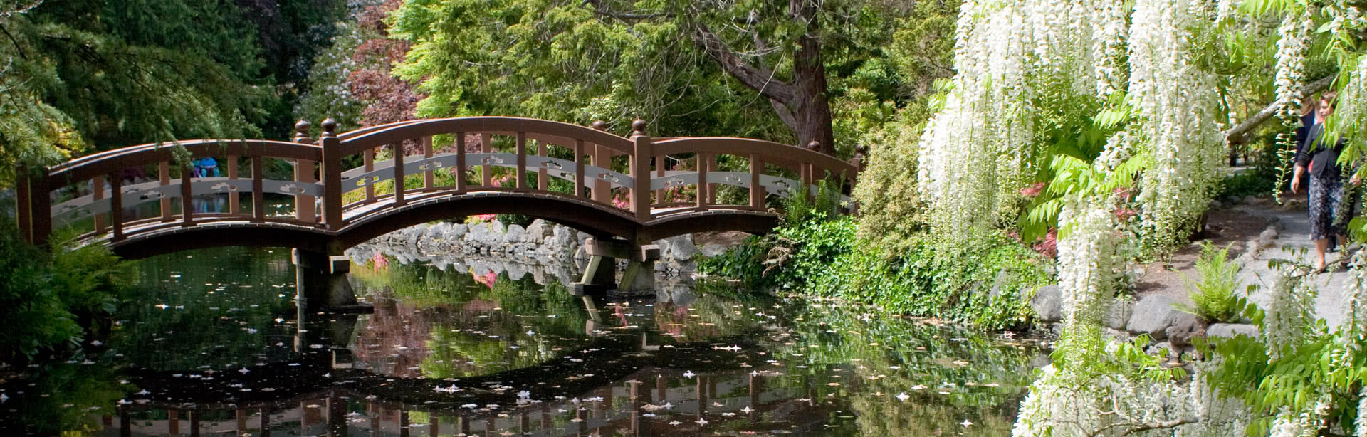 Bridge in Japanese Garden
