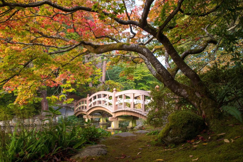 Bridge and tree in Japanese Gardens
